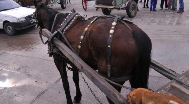 Un hombre fue detenido y acusado de maltratar a un caballo en Córdoba
