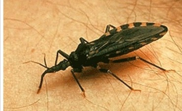 La Argentina es el país con más infectados por el parásito del Chagas