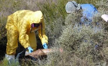 Una madre reconoció el cadáver de su hija, mutilada en Mendoza