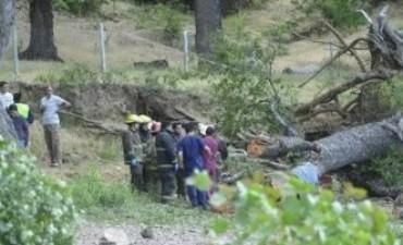 Neuquén: dos hermanitos murieron al caerles encima un árbol