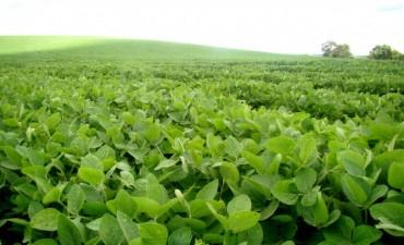 La soja retrocedió a sus precios más bajos en casi 7 años