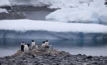 Un iceberg causó la muerte de 150 mil pingüinos en la Antártida