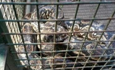 Alertan sobre víboras en Córdoba