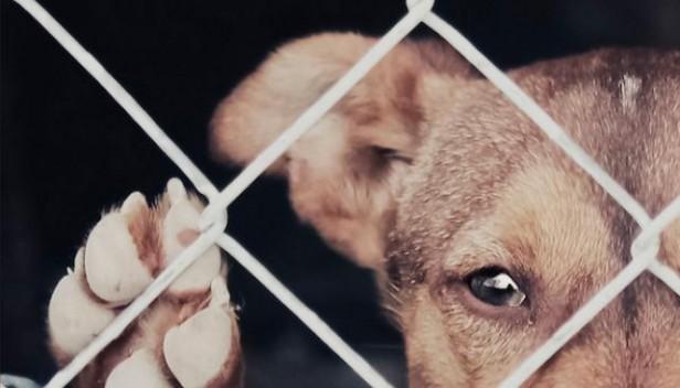 Mataron a 37 perros en un refugio de barrio San Vicente