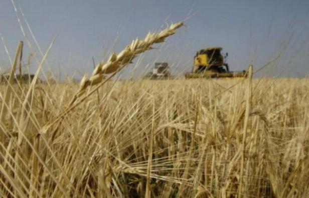 La cosecha de trigo fue record en la última campaña
