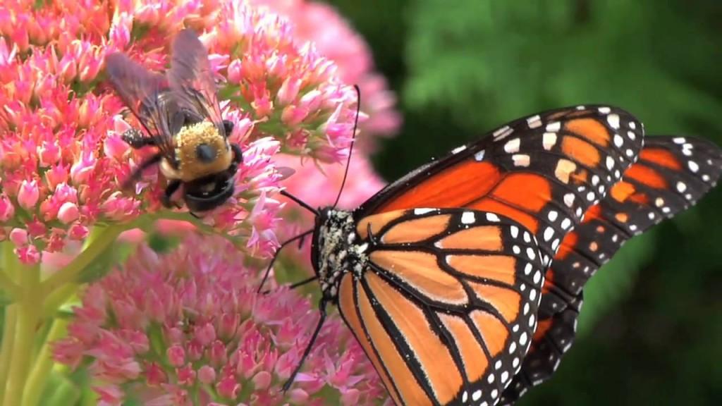 Por qué la escasez de insectos es un problema con graves consecuencias