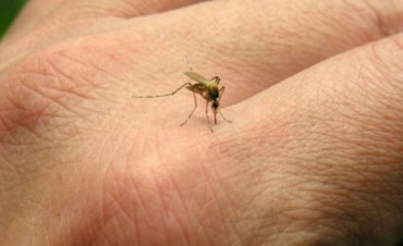 Confirmaron 70 casos de dengue autóctono en Córdoba Capital