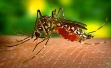 El aumento de casos de dengue pone al límite a los hospitales