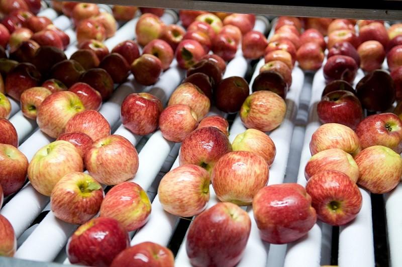 Argentina volverá a exportar manzanas y peras a Brasil