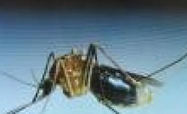 Suman 122 los casos de  Dengue autóctono