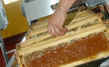 Prohíben la venta de una miel elaborada en Jesús María