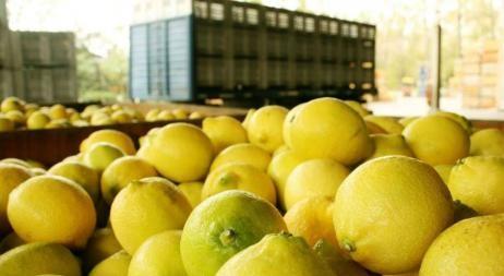 Argentina podrá vender limones a EE.UU.