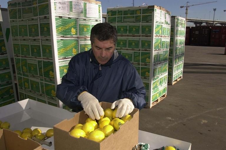 Concretan hoy la primera venta de limones a EE.UU.
