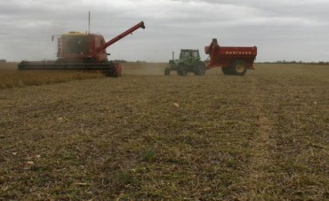 Confirman cosecha récord de soja en Córdoba