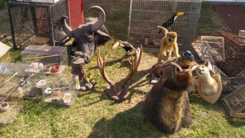 Encontraron animales silvestres vivos y disecados en una casa de Unquillo