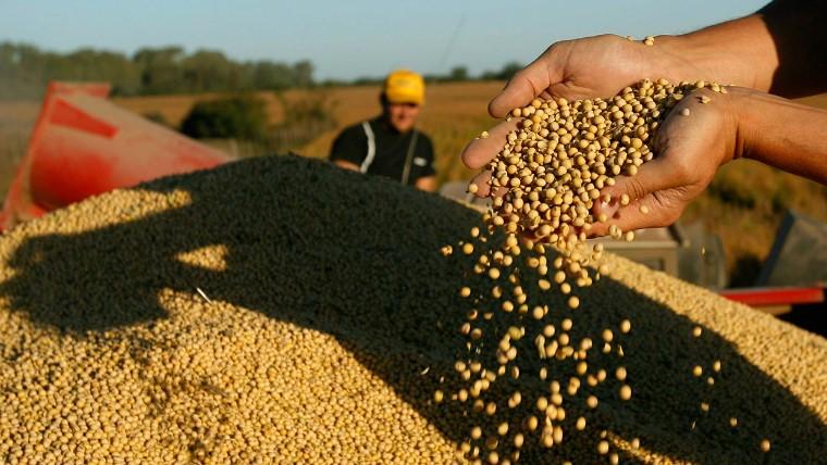 Expectativas por el escenario alcista en la soja y el maíz