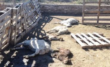 Una jauría mató a ovejas y cabras en escuela de Deán Funes