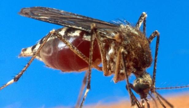 Chikunguña: otros dos casos positivos
