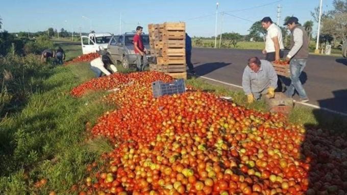 Regalan tomates en Corrientes: productores reciben un peso por kilo