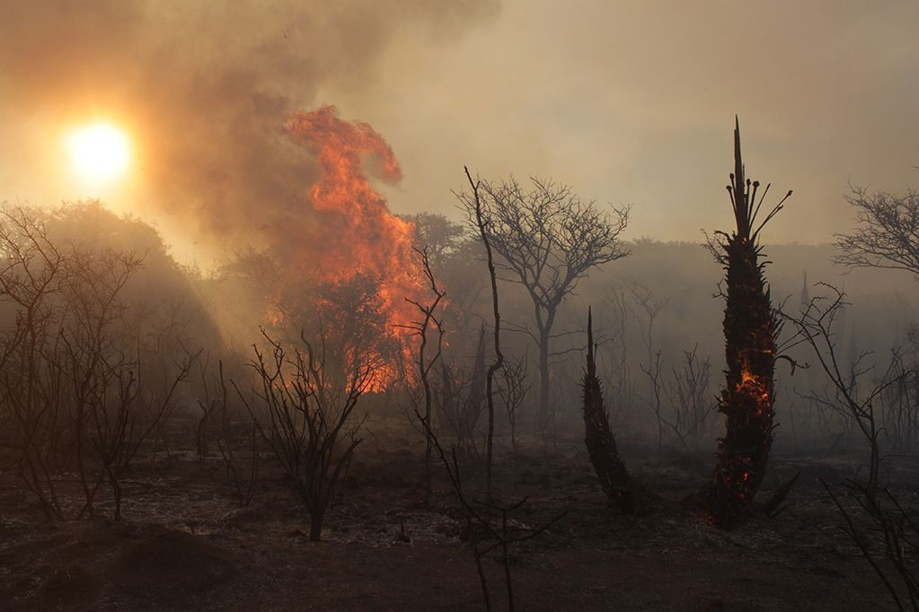 El fuego avanza y hubo evacuados en Caminiaga y San Pedro Norte