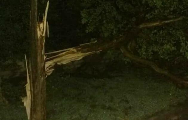 La cola de un tornado derribó 100 árboles en La Cumbre