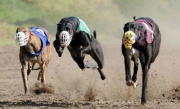 Hallaron galgos muertos tras la prohibición de las carreras