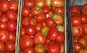 Piden reducir el consumo de tomate por posible escasez